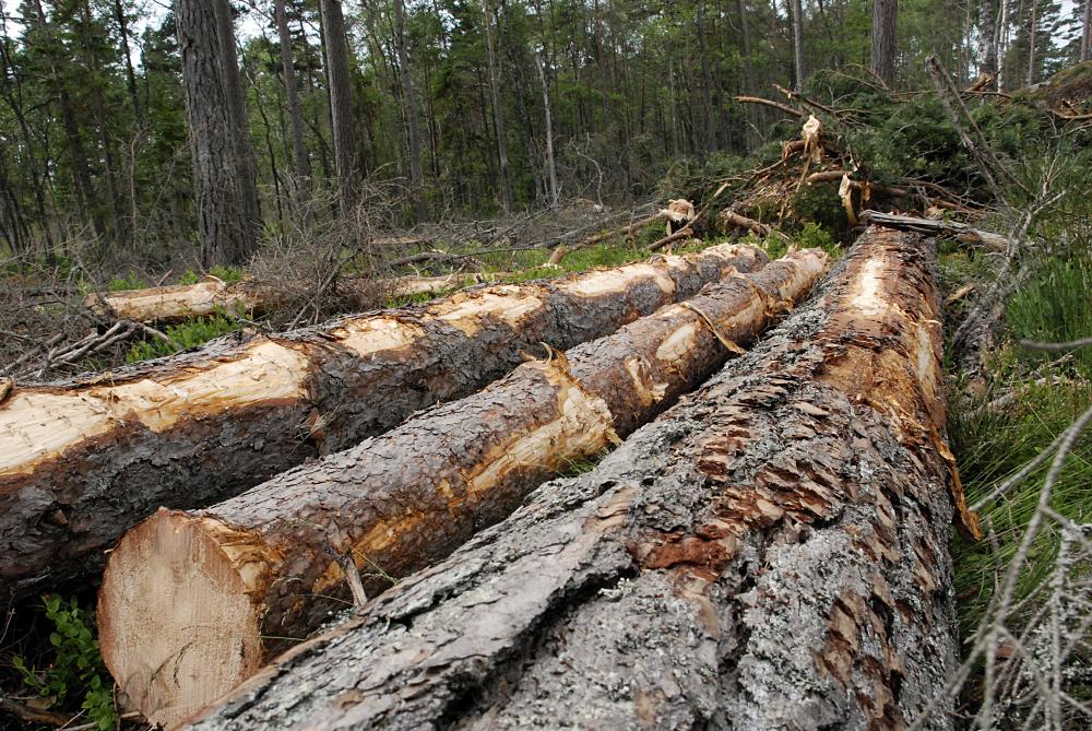 SLC - Skogsinventering 1