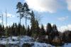 Skogslag