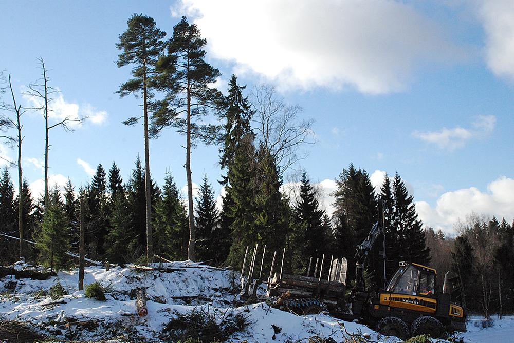 SLC - Skogslag