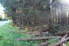 Skogsskadelag Img 7054