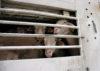 Internationale Taggegen Tiertransporte1 2