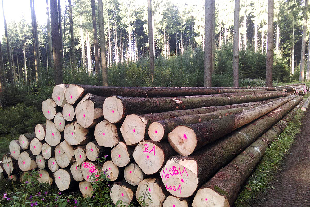 SLC - Holzgemenischaft Holzernte 4