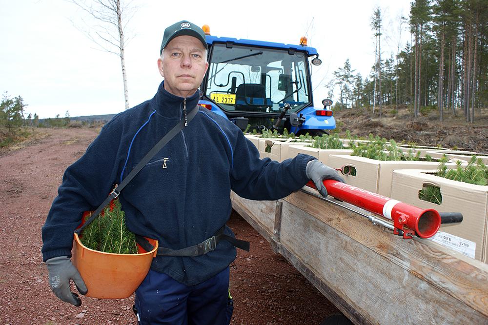 SLC - Skogs Holmroos 1 Webben
