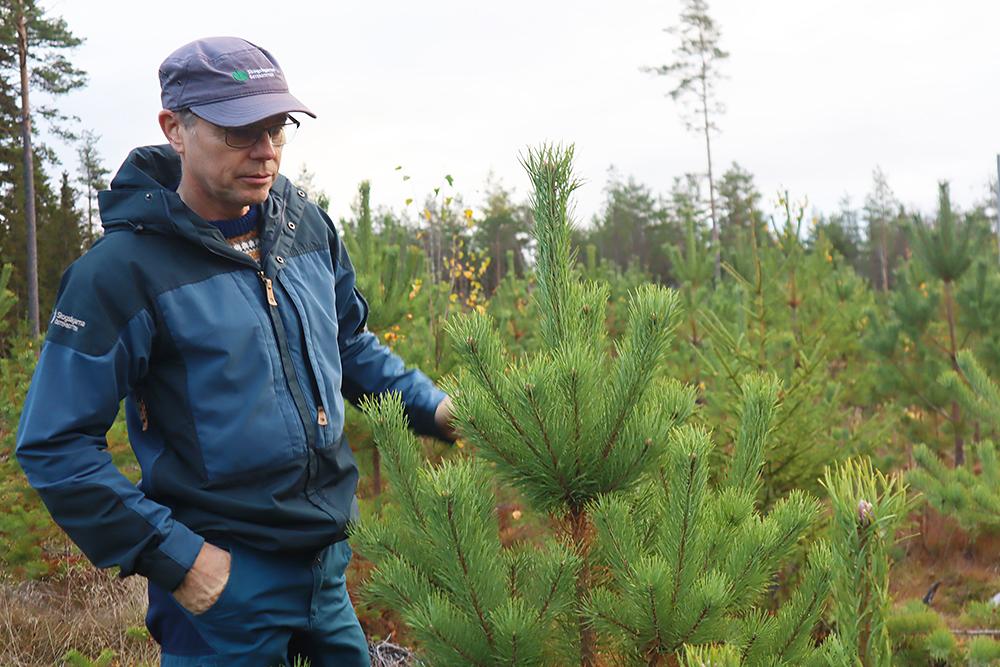 SLC - Skogsfornyelse 2 A Webben