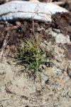 Planterare 3 B Webben