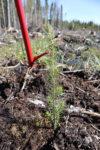 Planterare 4 Webben