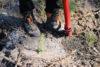 Planteringsprov 3 Webben
